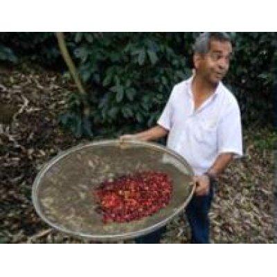 画像2: ブラジル キャラメラード